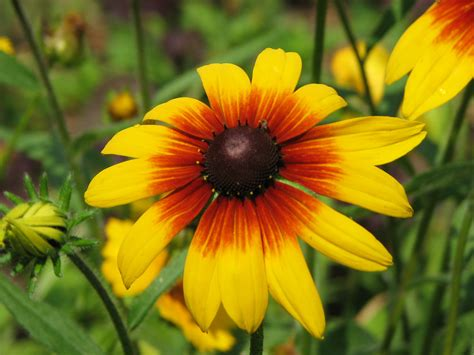 garden helpers best plants for pollination pollennation