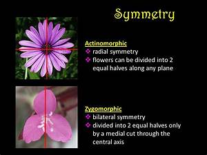 Flowers Are modified twigs adapted primarily for ...