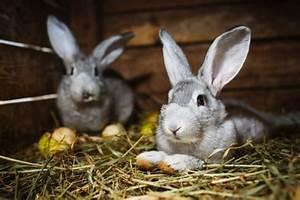 Hundehaltung Mietwohnung 2017 : tierhaltung archives ~ Lizthompson.info Haus und Dekorationen