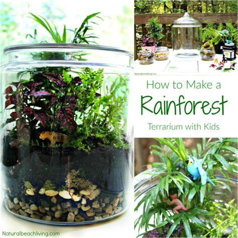 how yo make a terrarium the ultimate rainforest activities kids theme natural beach living