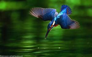 Interesting facts about kingfishers | Just Fun Facts  Kingfisher