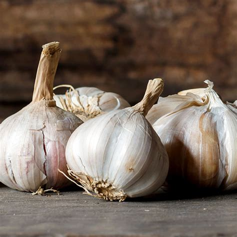 garlic nccih