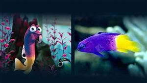 Nemo Fish Tank - Seahorse Aquariums Ltd