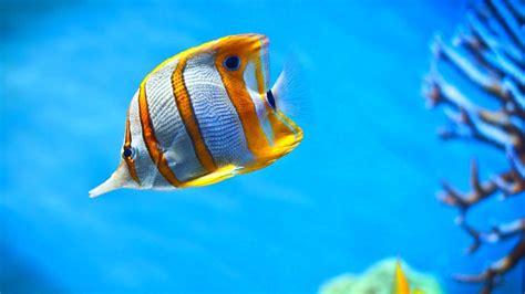 moving aquarium wallpaper  images