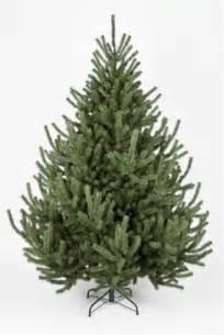 the 6ft mountain pine tree