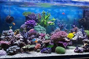 Welche Fische Passen Zusammen Aquarium : gesellschaftsbecken die richtige mischung im aquarium ~ Lizthompson.info Haus und Dekorationen