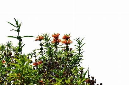 Garden Flowers Wild Transparent Flower Background Wildflowers