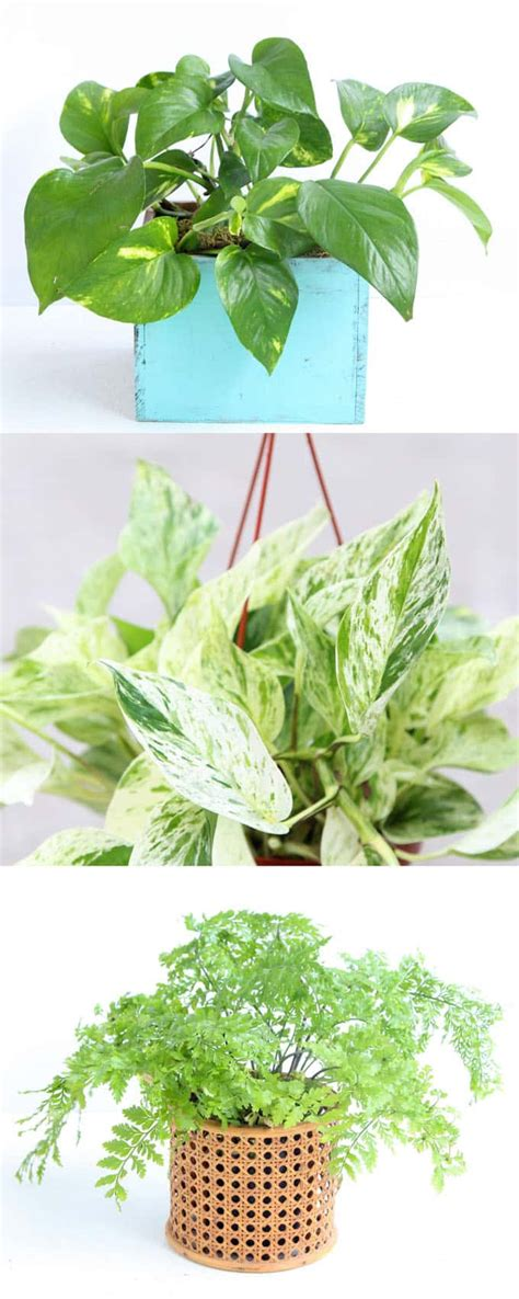 12 easy air purifying indoor plants for beauty well being a piece of rainbow