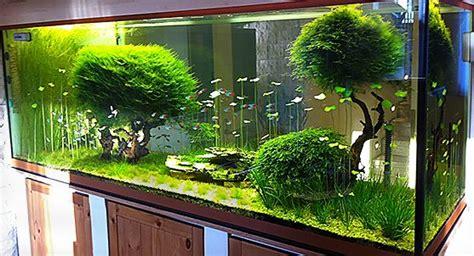 Aquascaping Shop by Kundenaquarien Aquascaping Shop F 252 R Naturaquarien