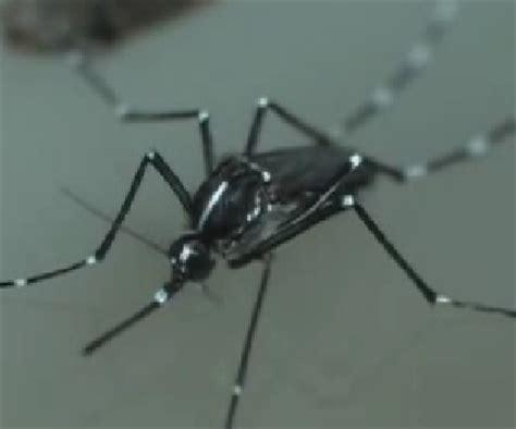 maqueta dengue maqueta dengue suzuki cars