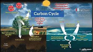Explain The Carbon Cycle  With Images