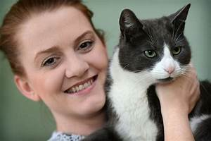 Miracle moggy found safe and well three weeks after being ...