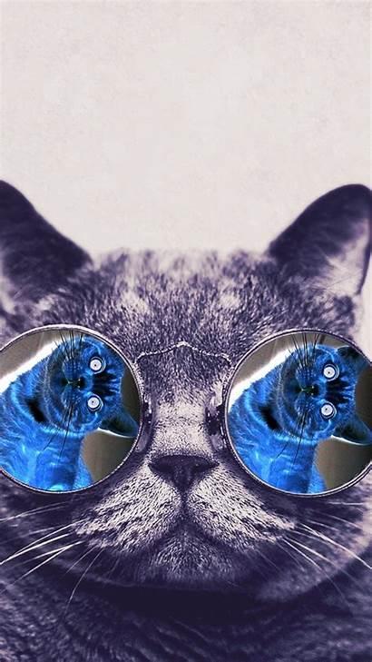 Cool Cat Backgrounds Cats Wallpapers Wallpapersafari Iphone