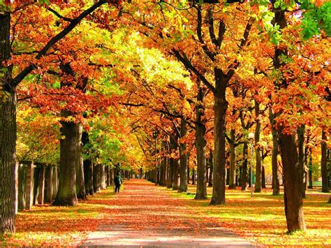 PICTURES: Autumn moments in Estonia