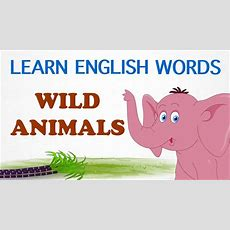 Wild Animals  Pre School  Learn English Words (spelling) Video For Kids And Toddlers Youtube