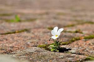 Beautiful, Small, Flower, Hd, Wallpaper
