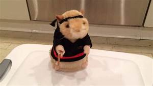 Singing and Dancing Hamster - Kung Fu Fighting - YouTube