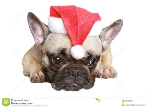 french bulldog clipart christmas pencil   color