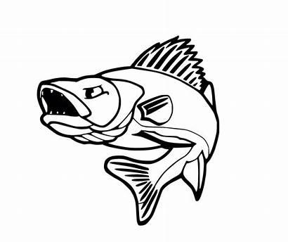 Walleye Clipart Drawing Fish Getdrawings Muskie Bass