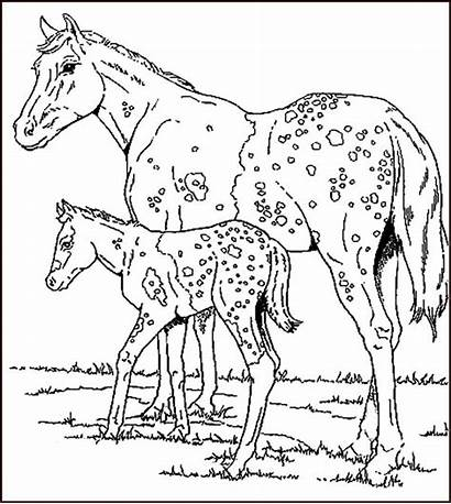 Coloring Pages Horse Exotic Template Printable Books