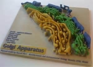 Golgi Apparatus Model
