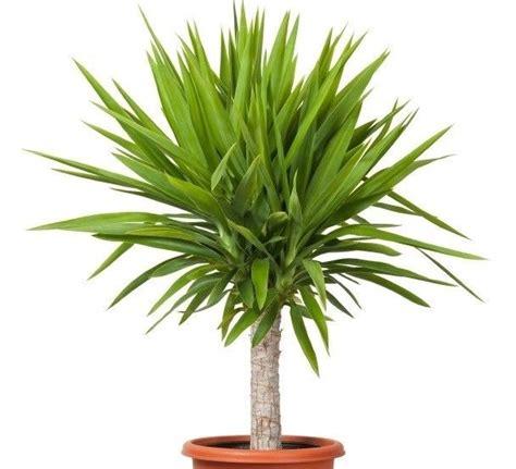 Yucca Palme Wie Oft Gießen by Pflanzen F 252 Rs Bad Die Besten Profi Tipps Auf Einen Blick