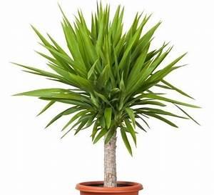 Palmen Für Drinnen : pflanzen f rs bad die besten profi tipps auf einen blick es gr nt so gr n diese pflanzen ~ Bigdaddyawards.com Haus und Dekorationen