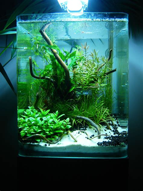 Aquascaping Layouts by Layout By Phanou Aquascaping A Fishy Idea For The