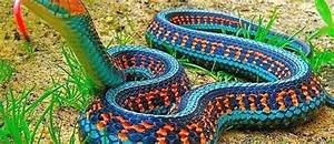Some Amazing Myths and Facts About Snakes - Did You Know