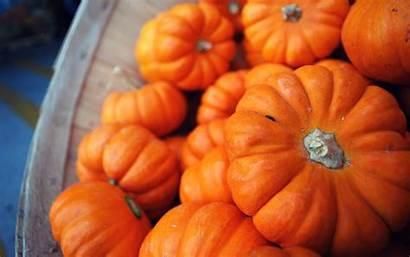 Pumpkin Backgrounds Wallpapers Desktop Screensavers Thanksgiving Fall