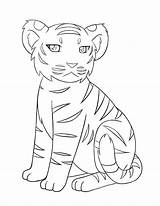 Coloring Pages Tiger Cute Tigers Realistic Easy Baby Drawing Drawings Nature Animal Colouring Adult Tooth Print sketch template
