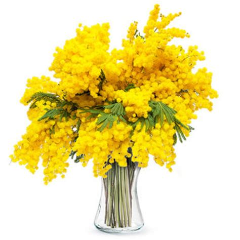 fiori 8 marzo 8 marzo bouquet di fiori e mimosa per la festa della donna