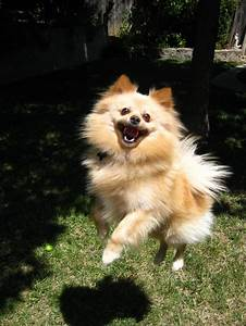 22 Dogs Who Are Just Really Excited To Be Dogs
