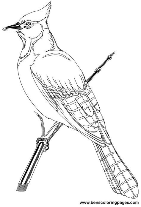 bird pictures to color birds to color