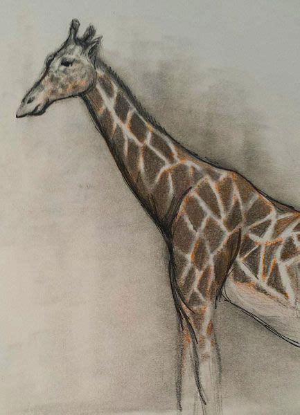 field trip drawing animals   zoo