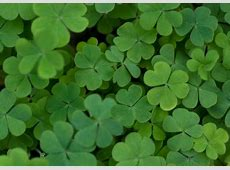 How St Patrick's Day Works HowStuffWorks
