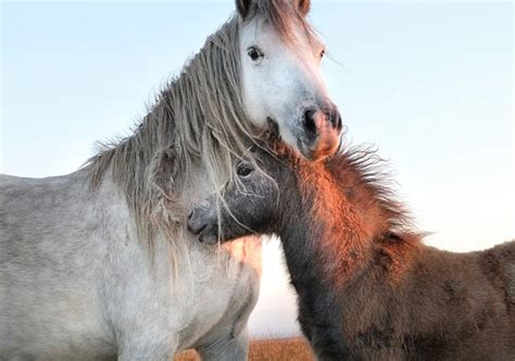 wild horses dangerous burros save rule revoked victory horse