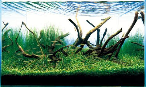driftwood aquascape aquascape series t a g