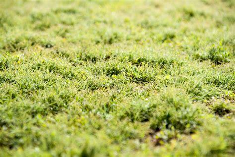Moos Im Rasen Dauerhaft Entfernen