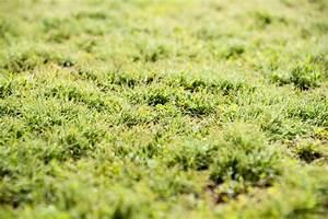 Moos Im Rasen Beseitigen : moos im rasen dauerhaft entfernen ~ Lizthompson.info Haus und Dekorationen