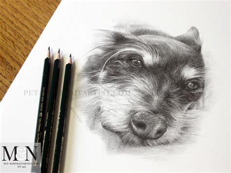pencil drawing pet portrait melanie nicholas pet portraits