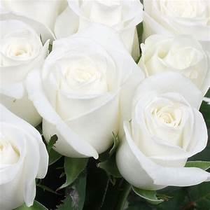 Bouquet Fleurs Blanches : bouquet de fleurs blanches signification ~ Premium-room.com Idées de Décoration