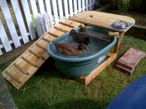 Duck Deck Backyard Duck Habitat All