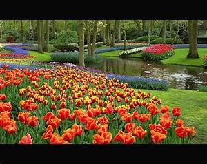 Garten Blumen Bilder : tulpe blumen garten bilder tulpe blumen garten bild und foto blumen bilder ~ Whattoseeinmadrid.com Haus und Dekorationen