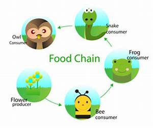 Simple Food Chain For Children | www.pixshark.com - Images ...