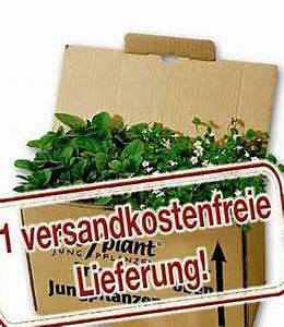 Bodendecker Statt Gras : easyplant gratis 39 versandkostenfrei sonderartikel bei baldur garten ~ Sanjose-hotels-ca.com Haus und Dekorationen
