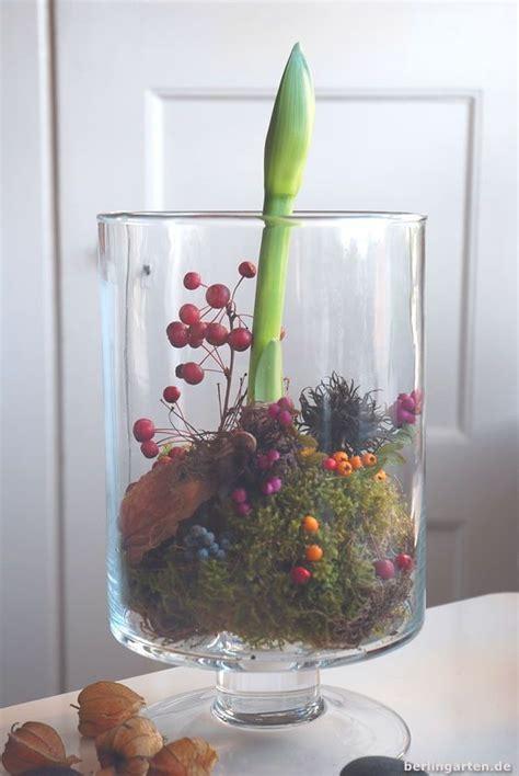Amaryllis Im Glas Dekorieren by Amaryllis Anspruchslose Deko Herbst Dekoration
