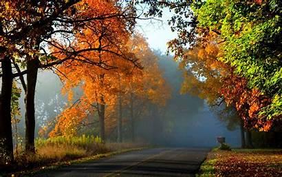 Forest Autumn Woods Path Nature Road Landscape
