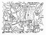 Rainforest Coloring Fauna Animals Animal Sketsa Gambar Forest Layers Contoh Template Printable Sheets Tropical Jungle Drawing Martinchandra Plants Koleksi Berbagai sketch template