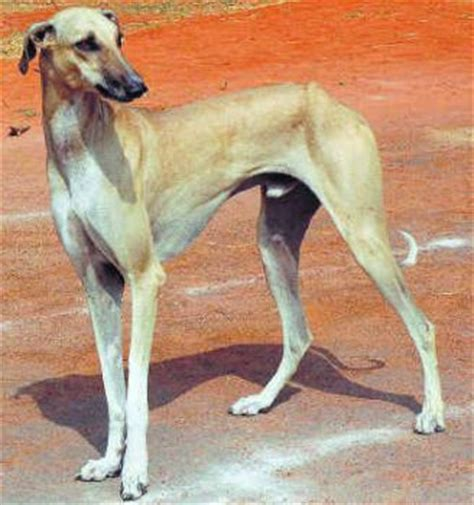 earth hour    indigenous dog breeds  india